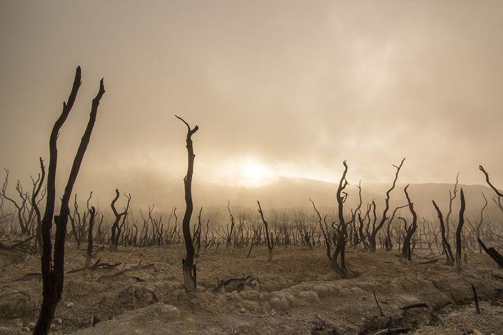Behövs socialism för att rädda klimatet??