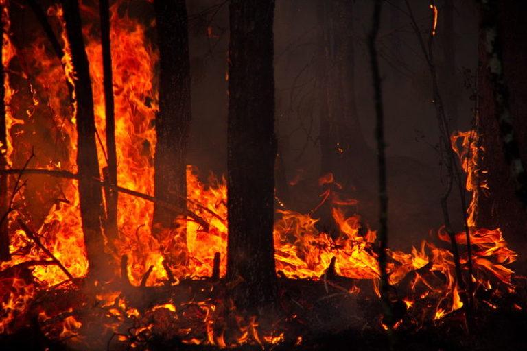 Skogsbränderna: En katastrof som beror på kapitalism och klimatförändringar? Och vad tycker Biden och Trump?
